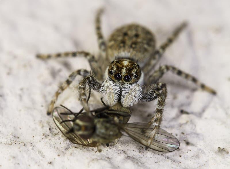 Скача паук держа дальше для того чтобы лететь стоковое изображение