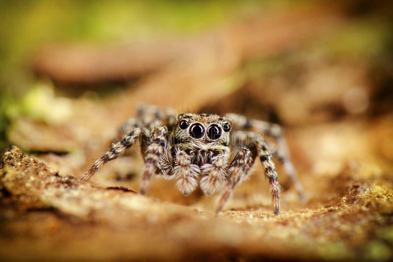 Скача пребывание паука на дереве стоковая фотография rf