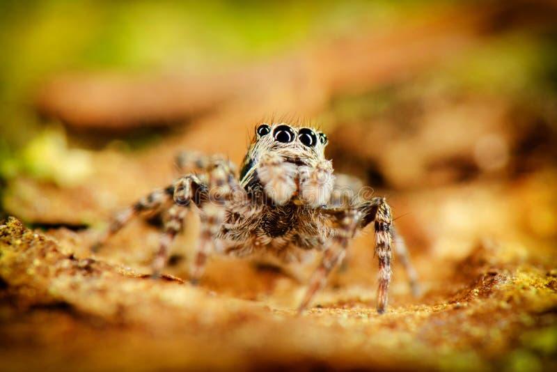 Скача пребывание паука на заде стоковое изображение rf