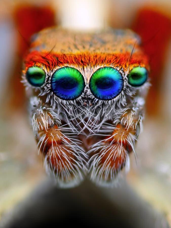 Скача спайдер Eyes макрос стоковая фотография rf