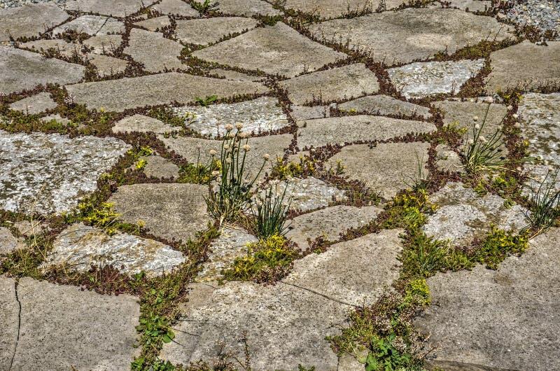 Скачками камни на зеленой крыше стоковое изображение rf