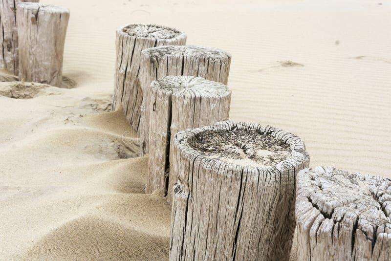 Скачками строка старых деревянных поляков пляжа значила действовать как волнорез стоковая фотография rf