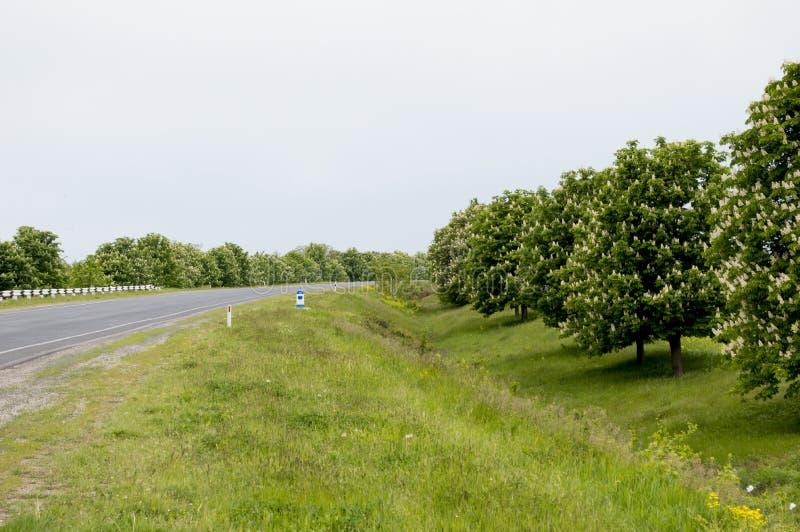 Скачут blossoming каштаны вдоль дороги стоковые изображения rf