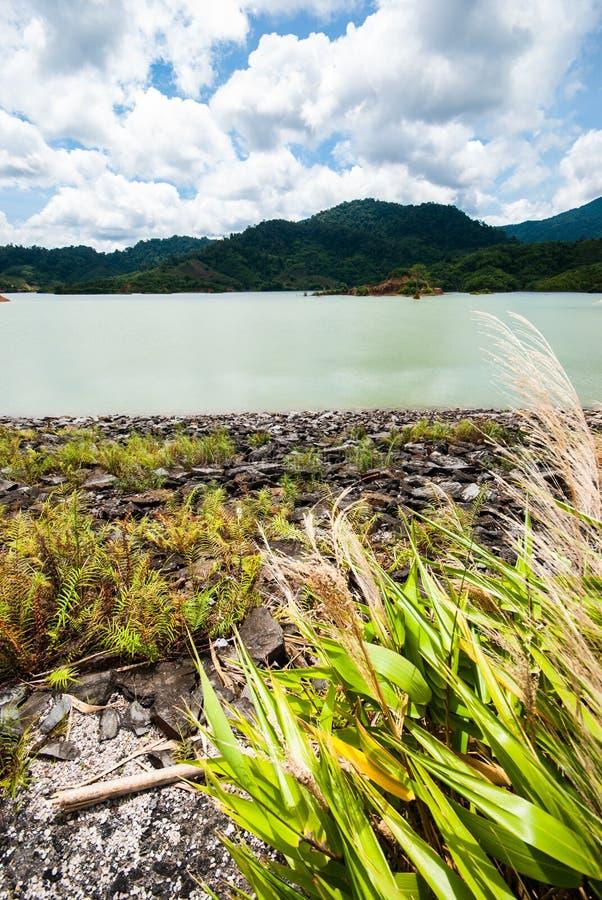 Download Скала на резервуаре стоковое изображение. изображение насчитывающей bluets - 33736635