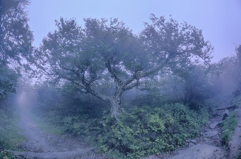 Скалистое sceni NC осени бульвара Северной Каролины Риджа садов стоковое фото rf