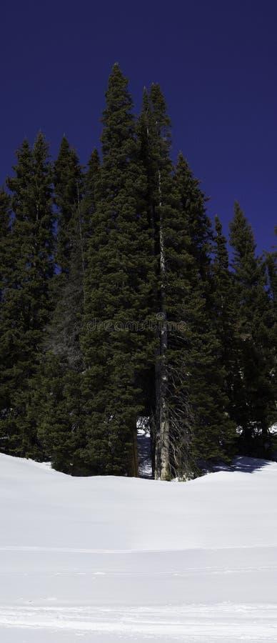 Скалистые горы стоковое фото