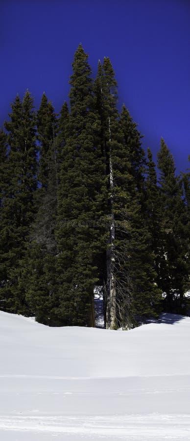 Скалистые горы стоковые изображения rf