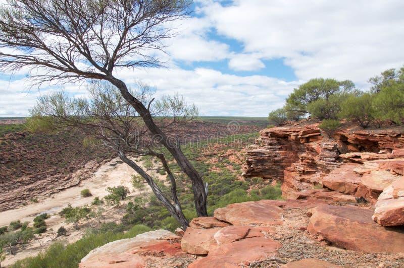 Скалы песчаника и ущелье реки Murchison стоковая фотография