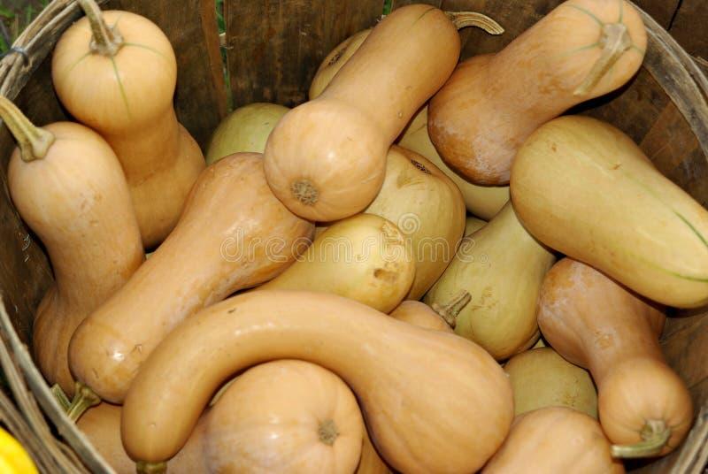 сквош butternut стоковые фото