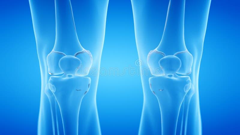 Скелетное колено иллюстрация штока