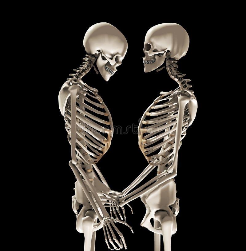скелеты влюбленности Стоковые Изображения