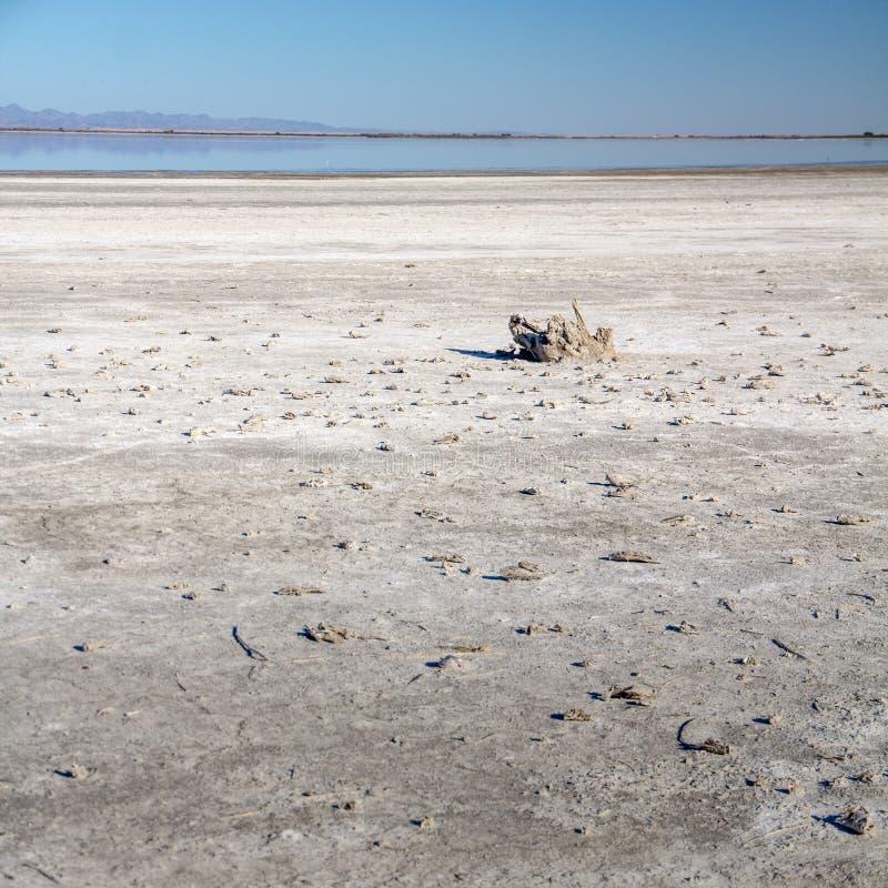 Скелеты рыб на кровати соли Море Солтона, Калифорния стоковые изображения