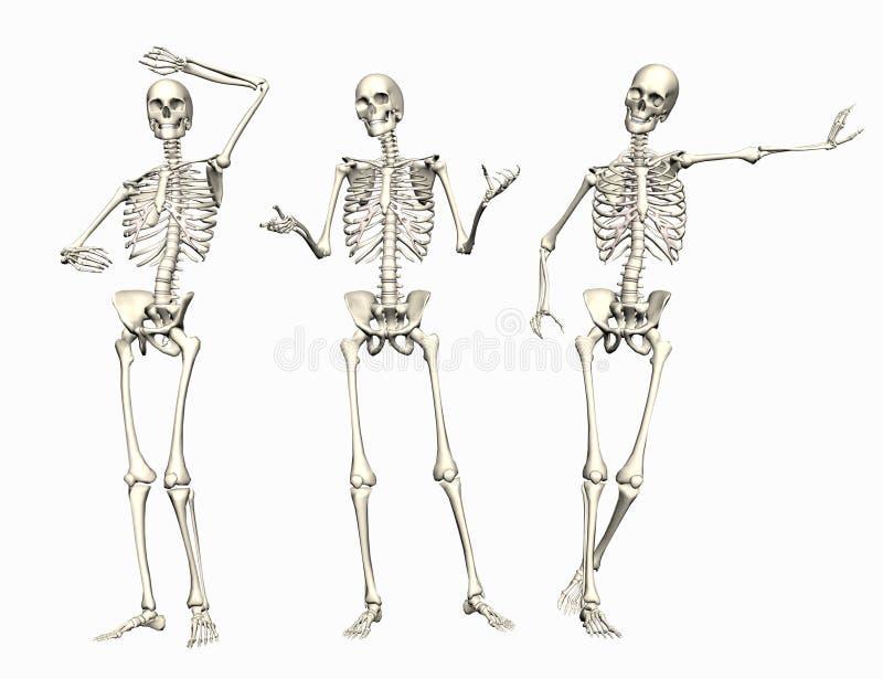 скелеты иллюстрация вектора