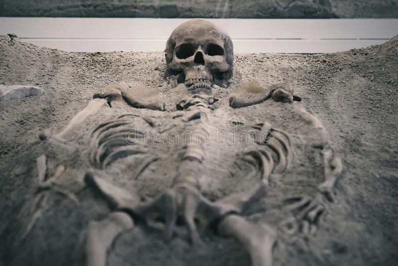 Скелет в песке стоковая фотография rf