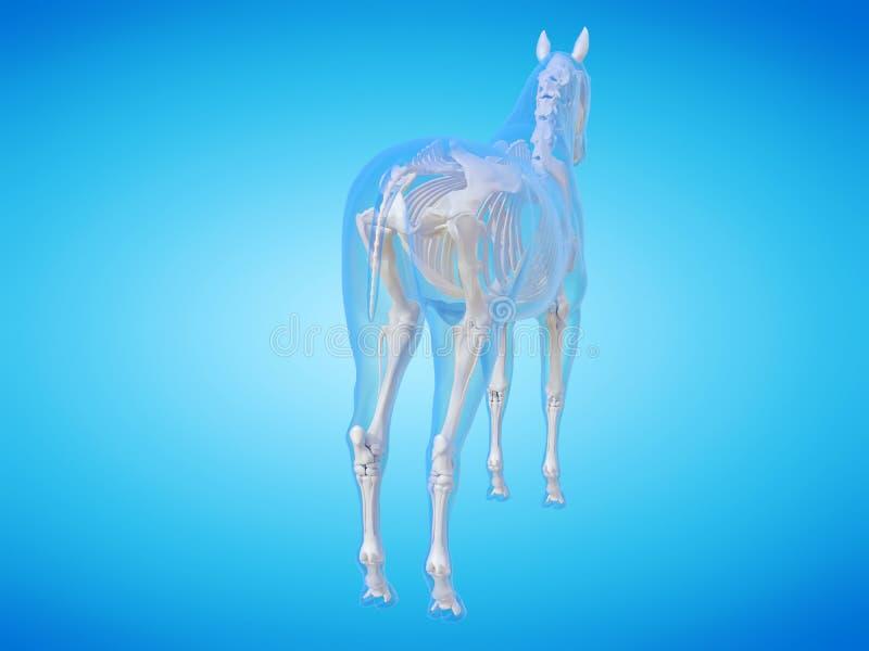 Скелет лошади бесплатная иллюстрация