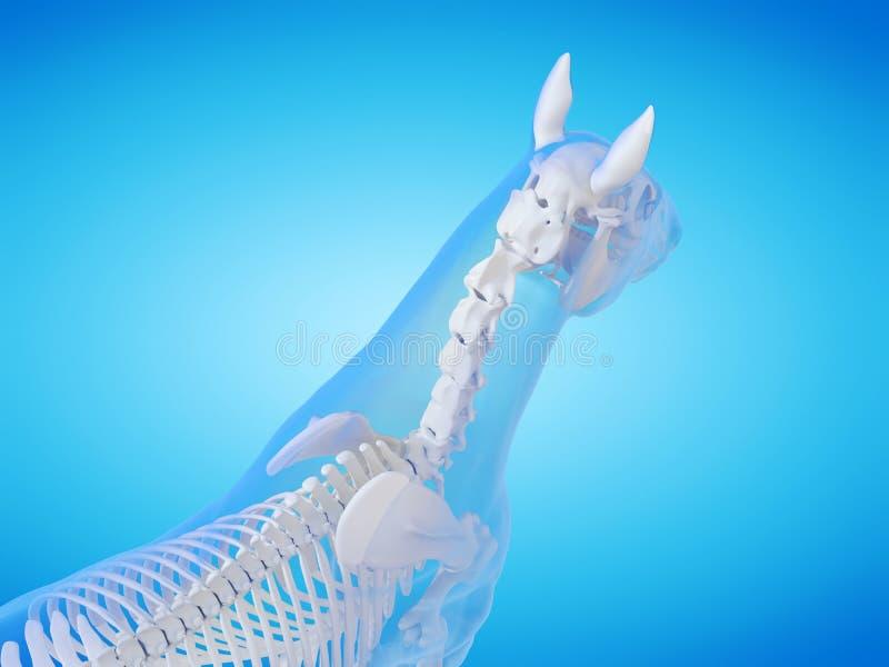 Скелет лошади иллюстрация вектора
