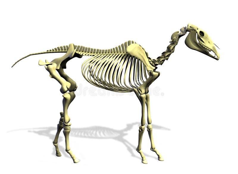 скелет путя лошади клиппирования иллюстрация вектора