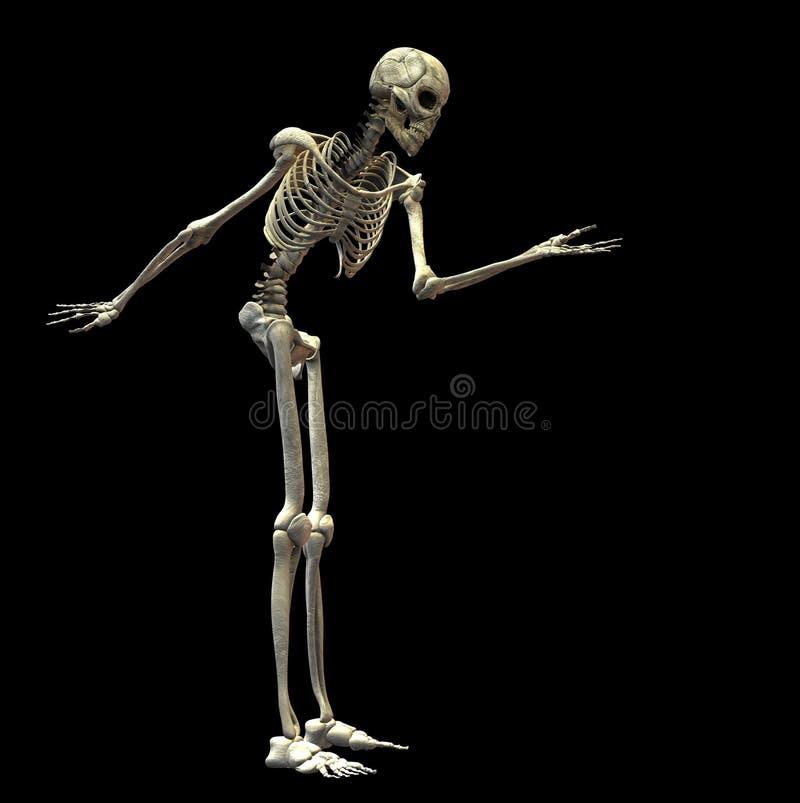 Download скелет иллюстрация штока. иллюстрации насчитывающей страшно - 6866519
