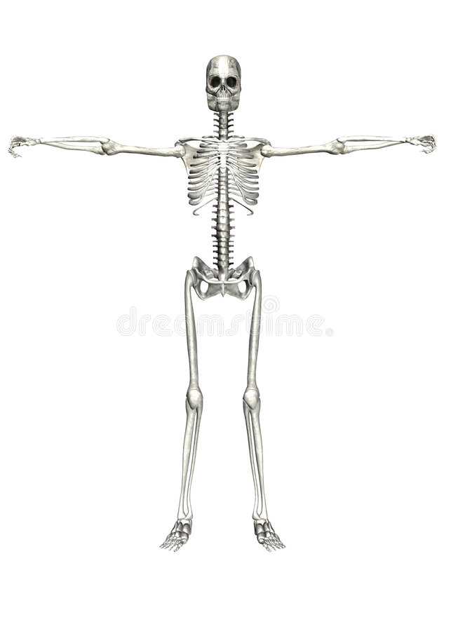 скелет 7 иллюстрация вектора