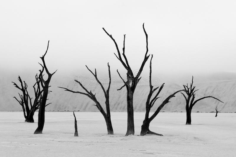 Скелеты в monochrome, Deadvlei дерева, Намибия стоковые фото