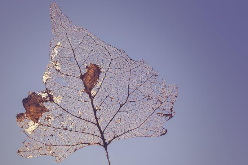 Скелет лист стоковое фото
