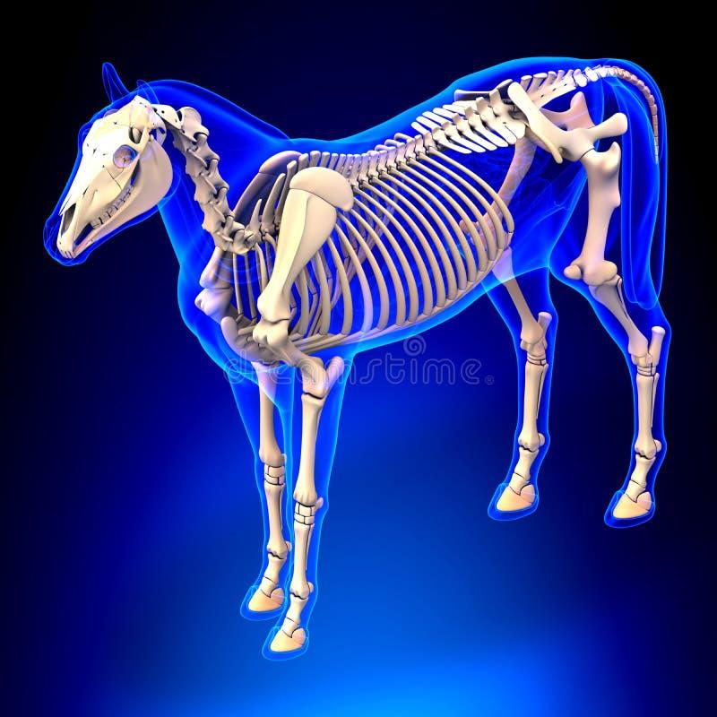Скелет лошади - анатомия Equus лошади - на голубой предпосылке бесплатная иллюстрация