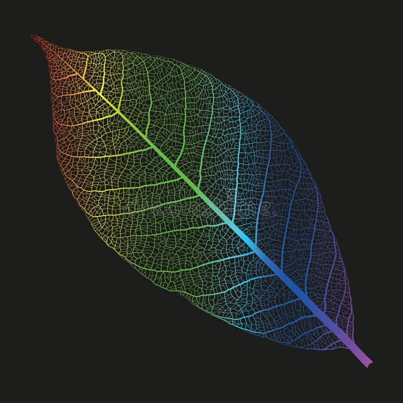 Скелет радуги вектора лист стоковые фотографии rf