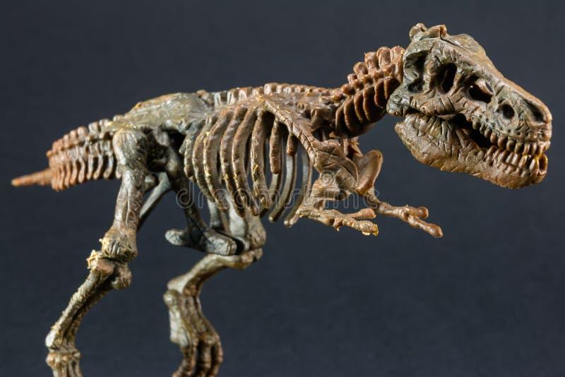 Скелет тиранозавра t Rex динозавра на черной предпосылке стоковая фотография rf