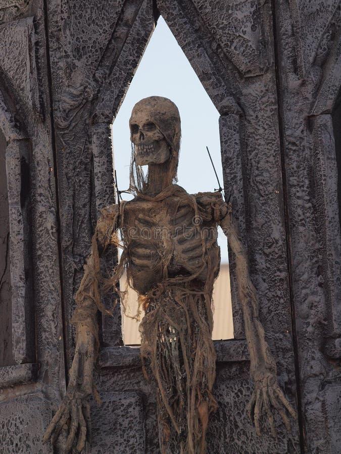 Скелет стоковые изображения