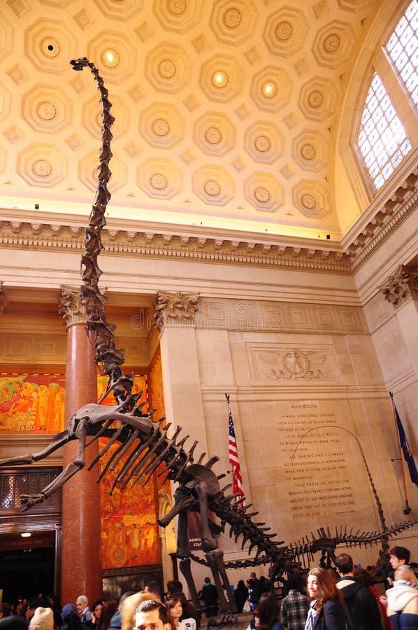 Скелет Dino динозавра в американском музее естественной истории Нью-Йорка NYC стоковое изображение