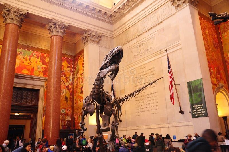 Скелет Dino динозавра в американском музее естественной истории Нью-Йорка NYC стоковые изображения rf