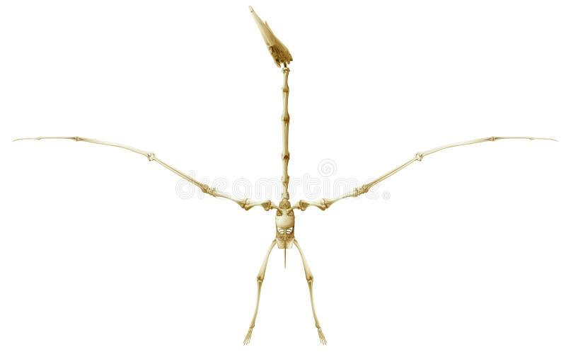 Скелет Pterodactyl бесплатная иллюстрация