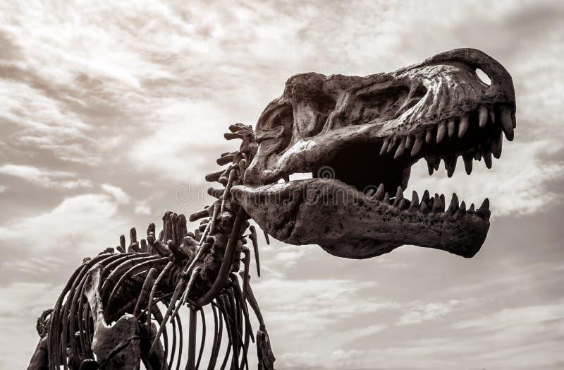 Скелет rex тиранозавра стоковая фотография rf