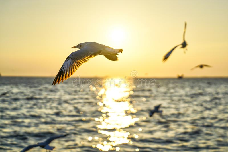 Скользя чайка через заход солнца стоковая фотография