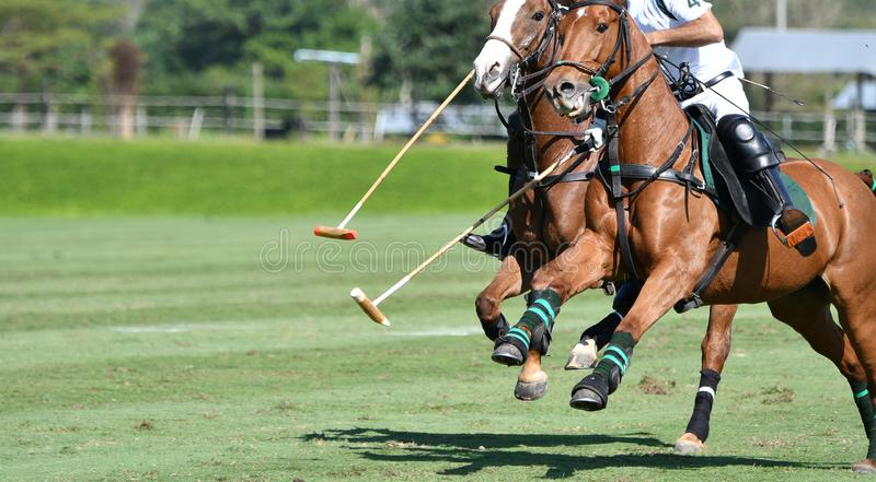 Скорость лошади в спичке поло стоковое изображение