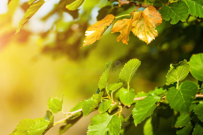 Скоро осень, листья поворачивают золотой стоковые изображения