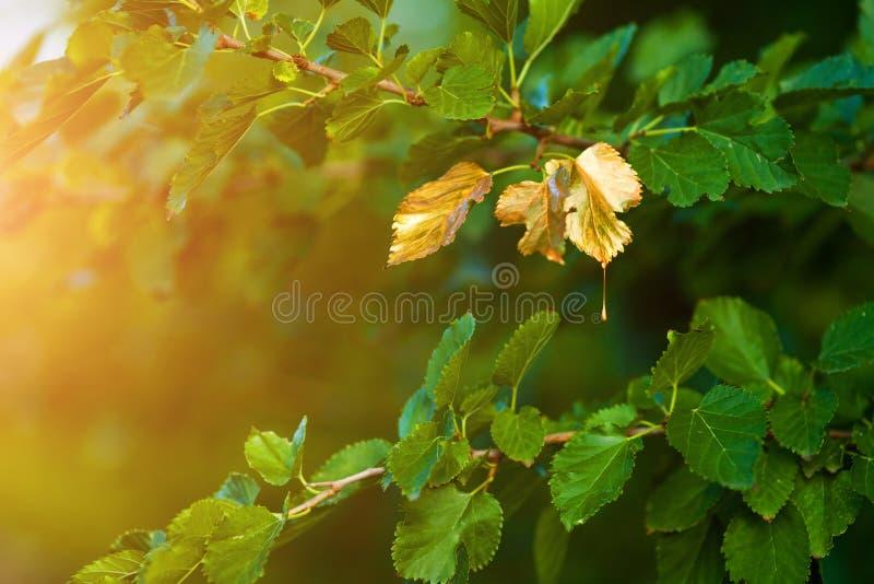 Скоро осень, листья поворачивают золотой стоковое изображение