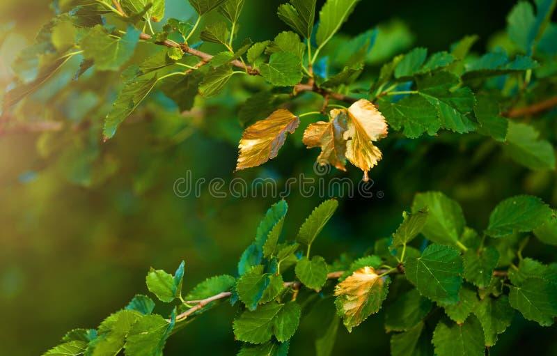 Скоро осень, листья поворачивают золотой стоковое фото rf