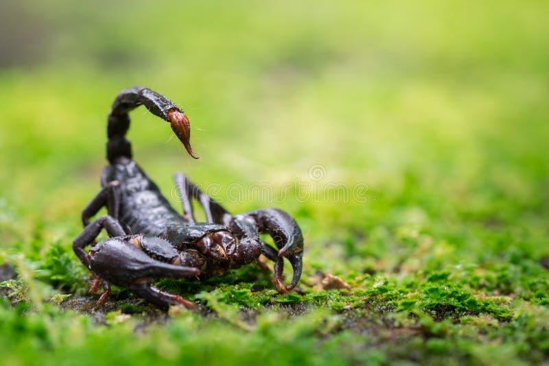 Скорпион в природе стоковое изображение