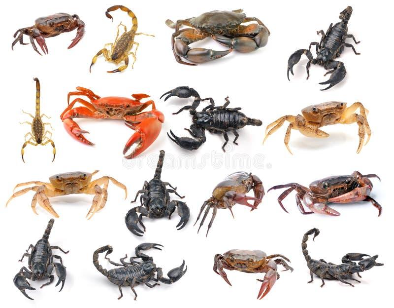 Скорпион и краб изолированные на белой предпосылке стоковая фотография rf