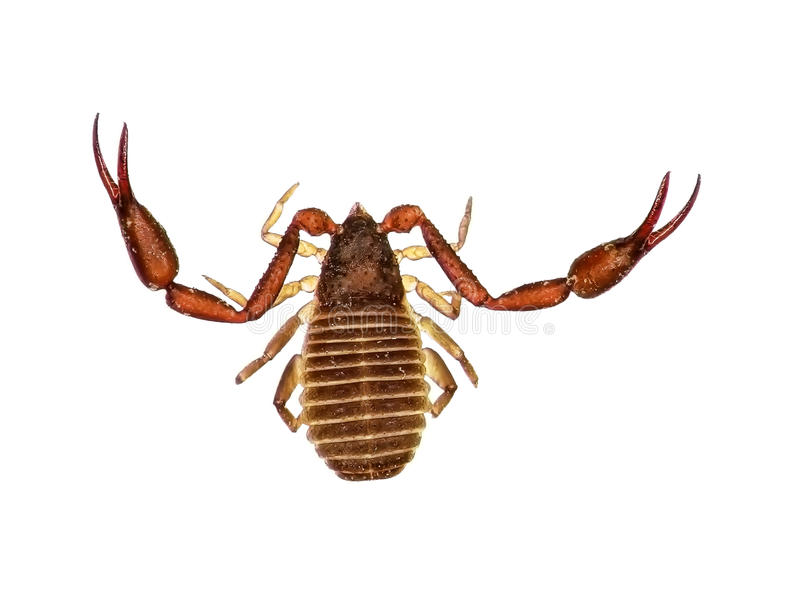 Скорпион книги стоковое фото