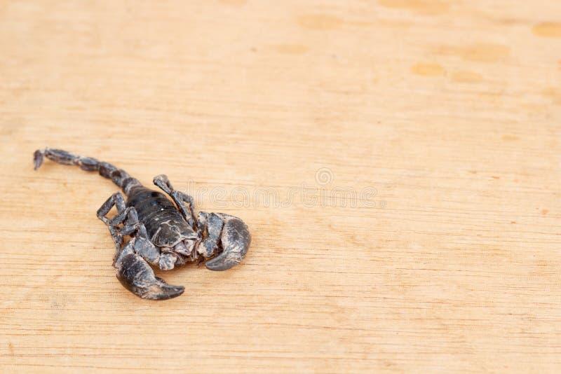 скорпион pandinus imperator emporer стоковое фото