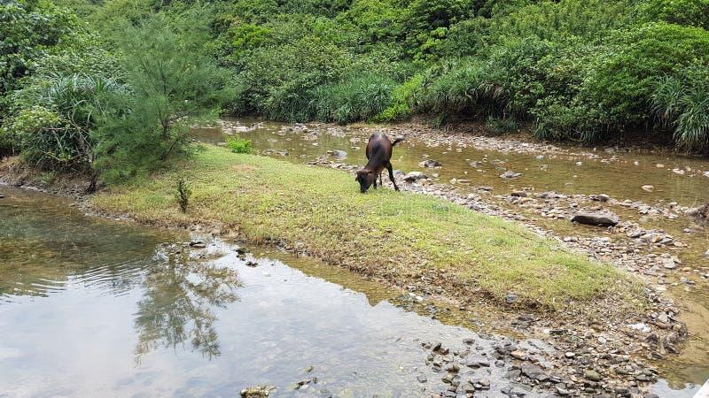 Скотины в траве стоковое изображение