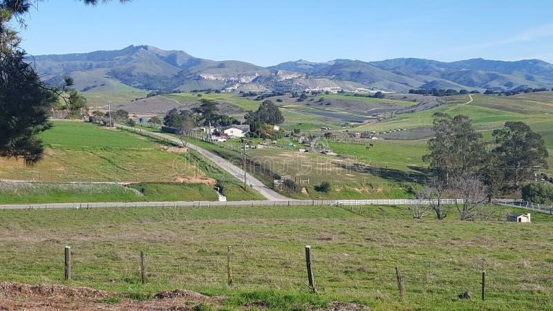 Скотины долины Salinas стоковые изображения rf