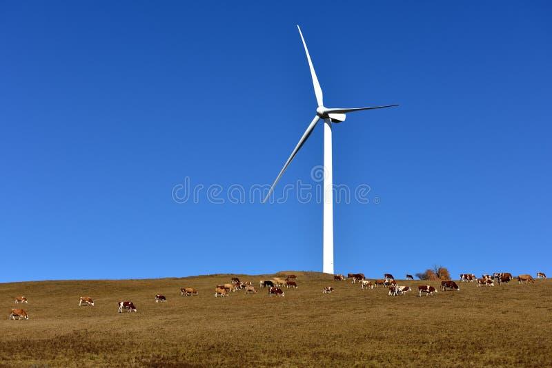 Скотины и генератор энергии ветра на злаковике стоковое изображение