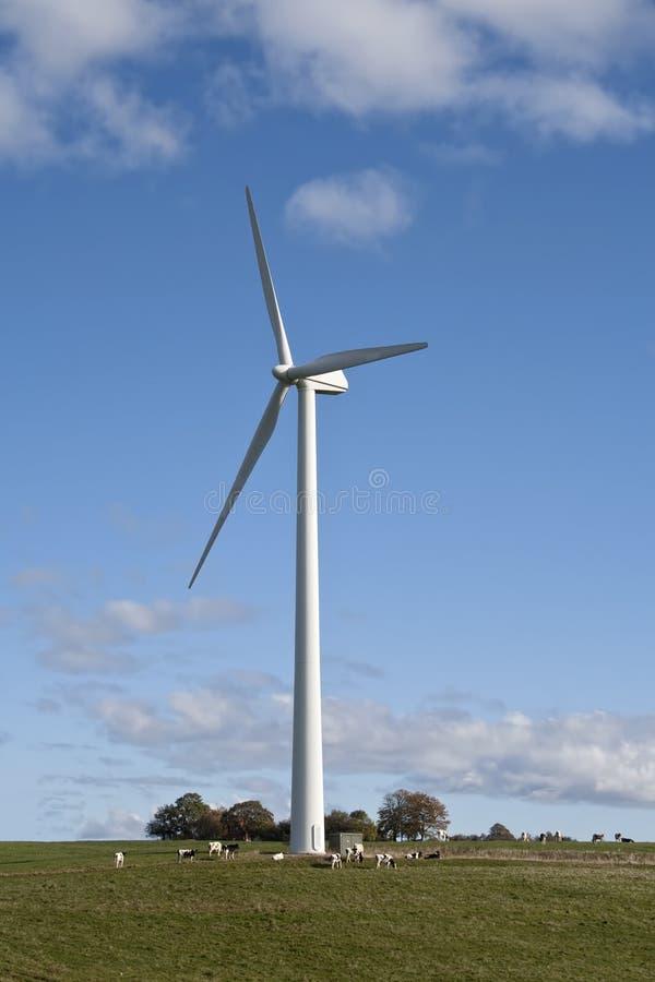 Скотины на ветротурбине стоковые фото
