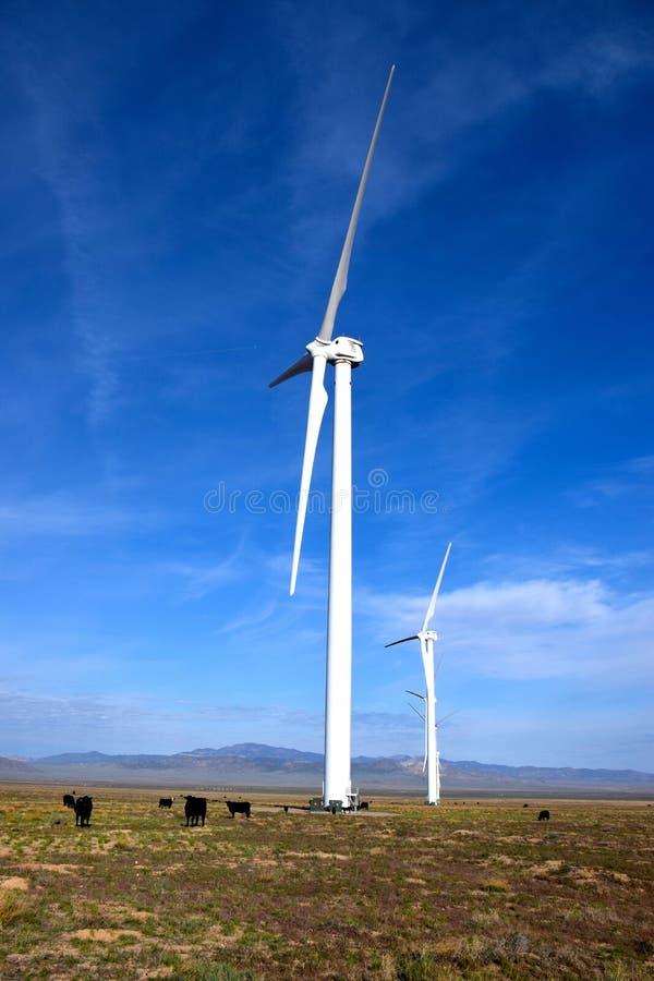 Скотины пася на ветровой электростанции стоковые фото