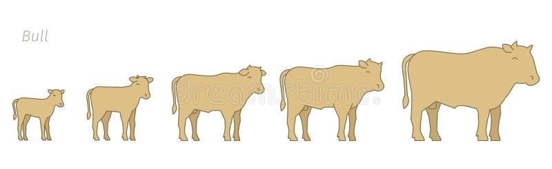 Скотный двор Bull Этапы жалуются набор роста Разводить продукцию говядины Поднимать скотин Икра растет вверх прогрессирование ани иллюстрация вектора
