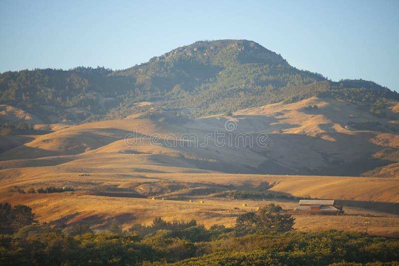 Download Скотоводческое хозяйство холмов, San Simeon, Калифорния Стоковое Изображение - изображение насчитывающей туризм, соединено: 33731339