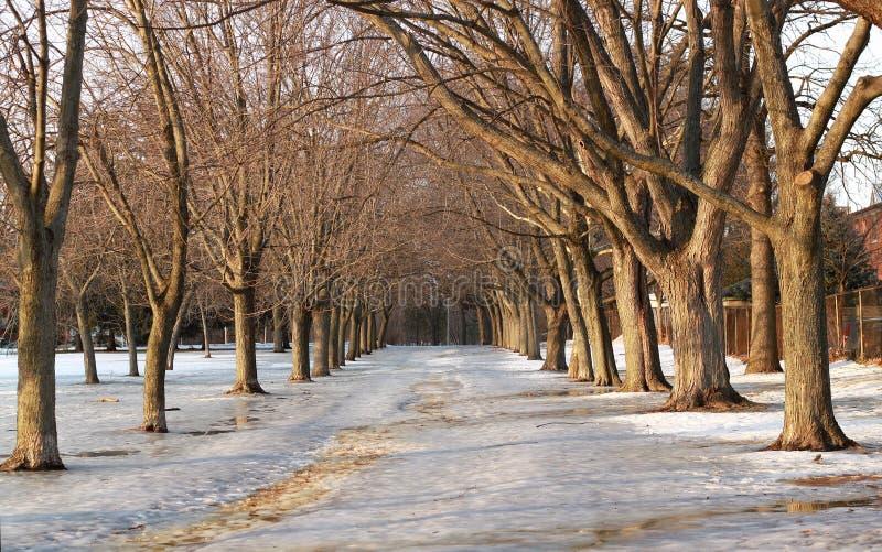Скользкая пешеходная дорожка в зиме, Торонто, Онтарио, Канада стоковые изображения rf